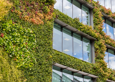 A wall covered in green plants